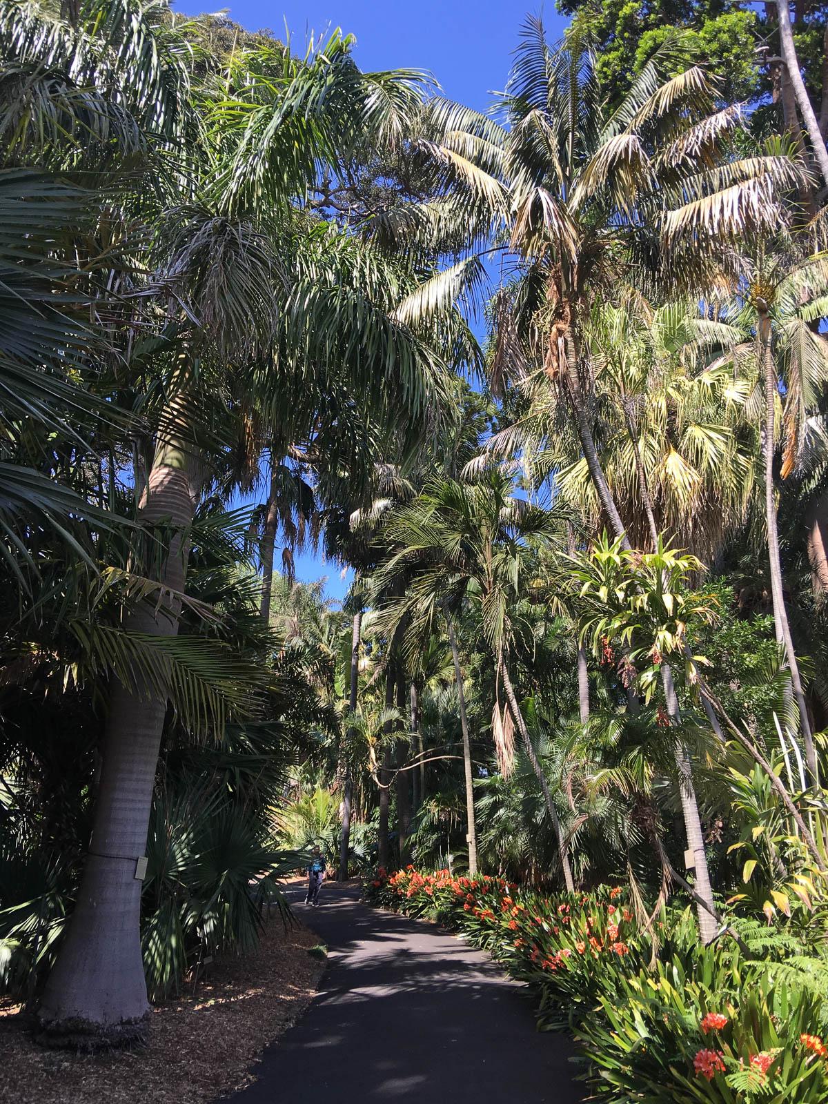 sydney-royal-botanic-gardens4
