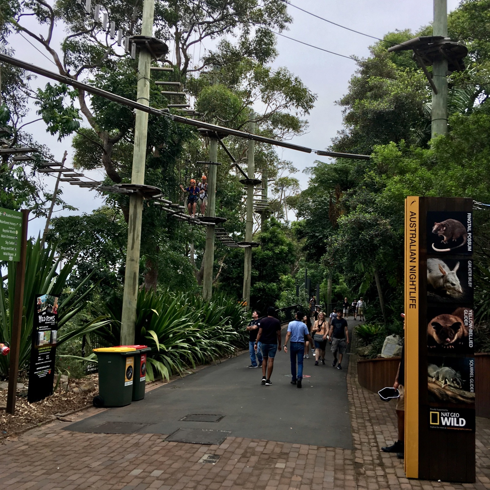 taronga-zoo-tree-adventures