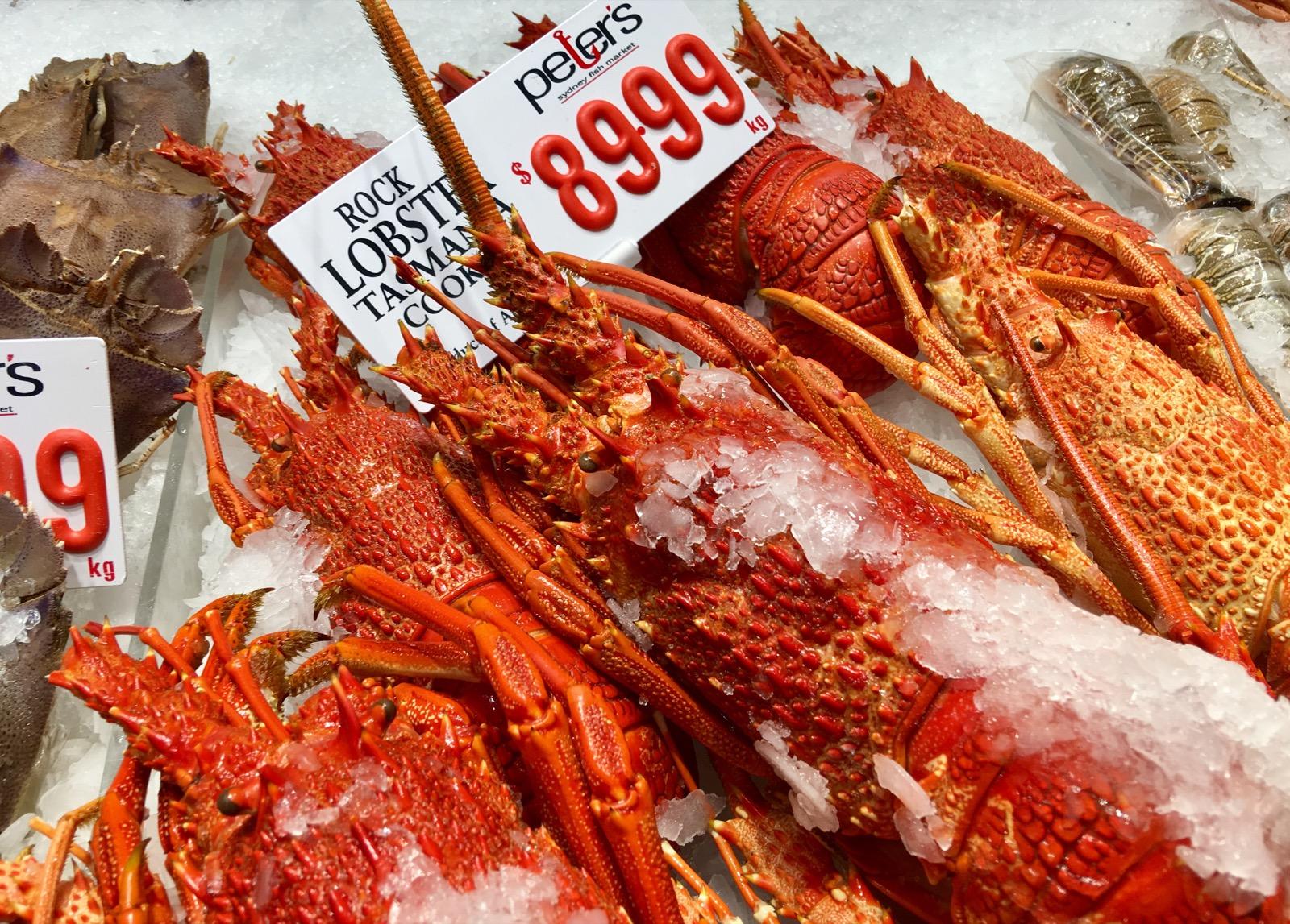sydney-fish-market_lobsters