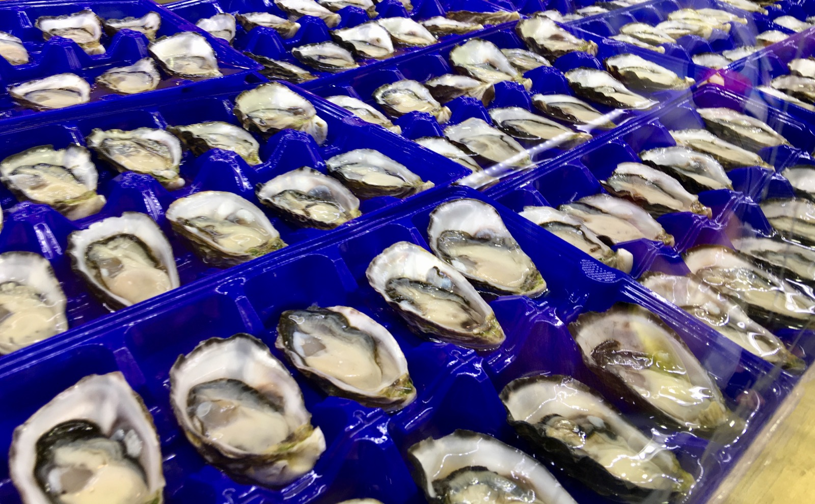 sydney-fish-market_oysters